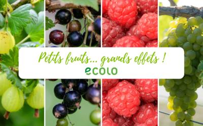 2018 – Petits fruits